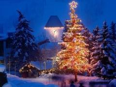 """Από που """"κρατάει"""" το έθιμο του στολισμένου Χριστουγεννιάτικου δέντρου;"""