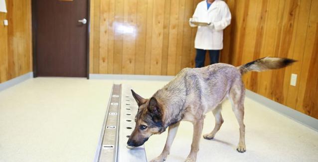 Είναι αλήθεια: Οι σκύλοι μυρίζουν πράγματι τον καρκίνο στην αναπνοή των ασθενών