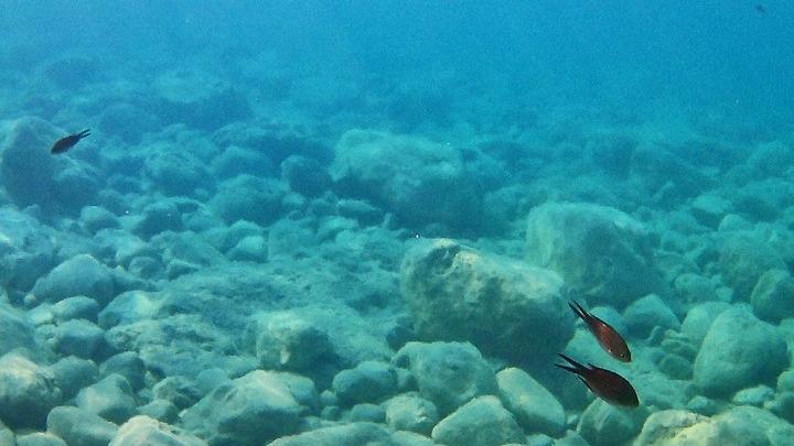 Θα χαθεί το 17% των θαλάσσιων ζώων μέχρι το 2100 αν δεν μειωθούν οι εκπομπές CO2