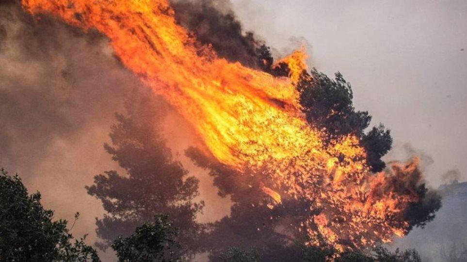 Πυρκαγιές στην Αυστραλία: Το έγκλημα σε βάρος του πλανήτη!